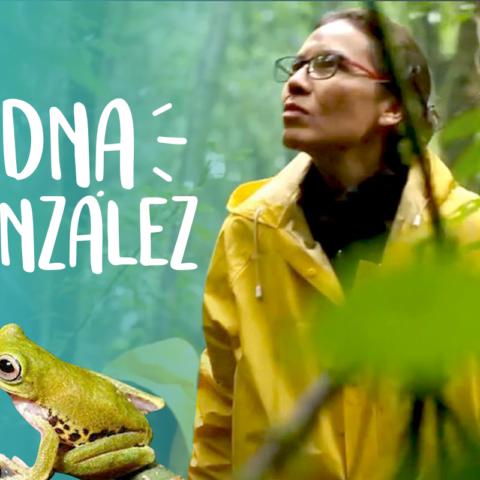 Científica Mexicana descubre una Nueva Especie de Ranas